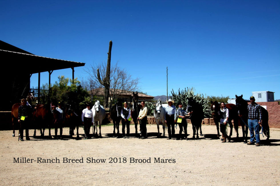 Breed show at the Miller-Ranch in Arizona
