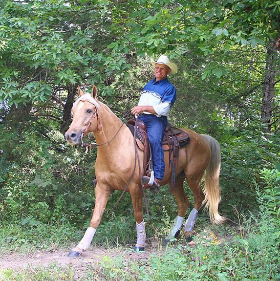 Missouri Foxtrotter