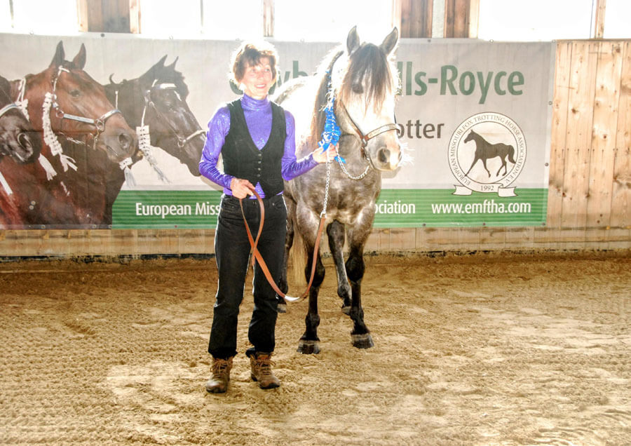 Owning your own Missouri Fox Trotter stallion
